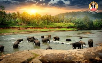 Sri Lanka Tours from India
