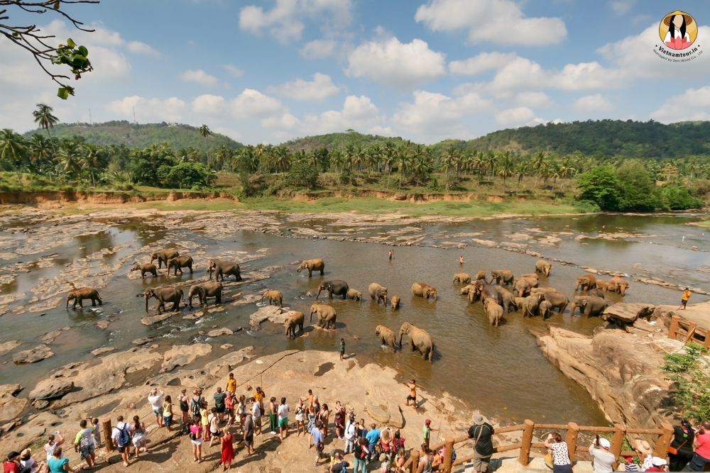 Sri Lanka Tours from India 19