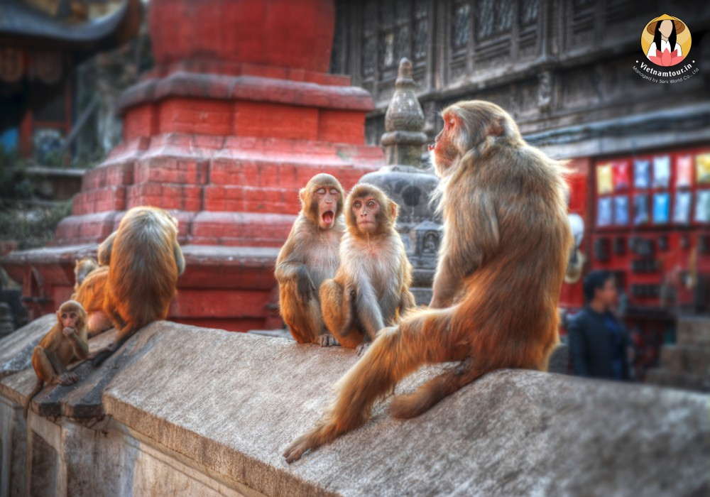 nepal tours from india 17