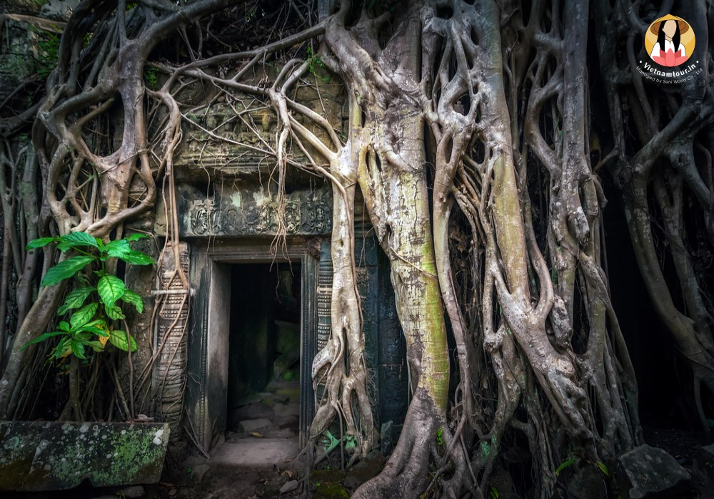 cambodia tours from india 24